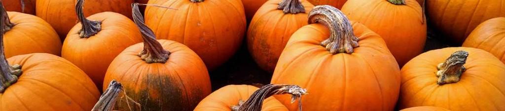 G Nstige Halloween Dekoration Online Kaufen Halloween